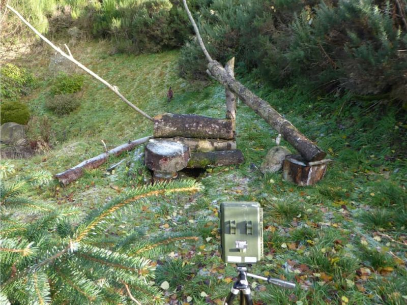 Wildcat feeding station with night-time camera